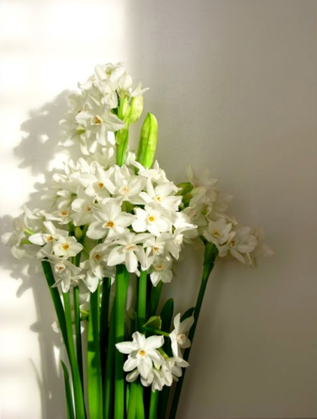 my lovely paperwhites