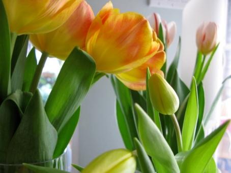 tulips2 feb 2013