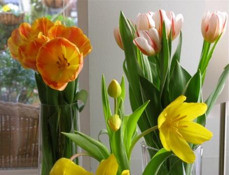 tulips6 feb 2013