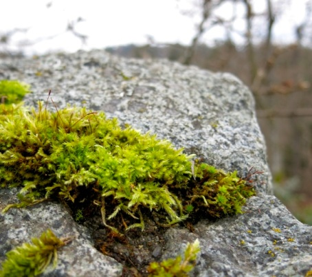 rockland moss