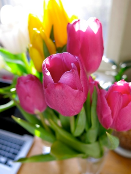 birthday tulips2