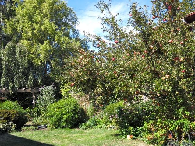 backyard with apple tree